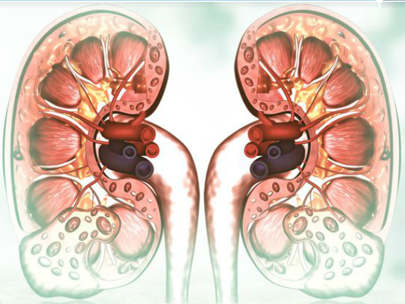 Urinary Catheterisation
