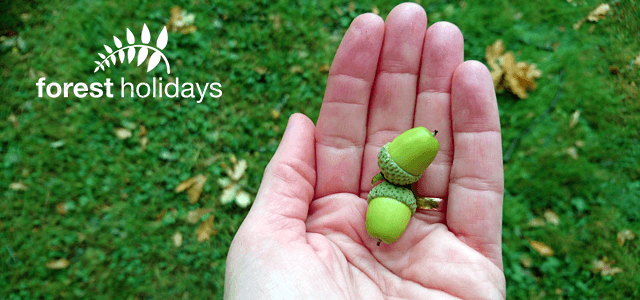 From little acorns… Forest Holidays